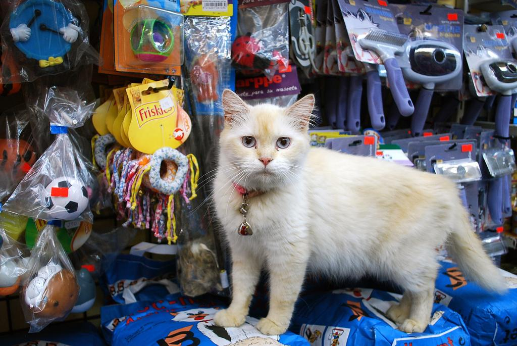 Abrir una tienda de accesorios para mascotas