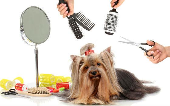 Trámites para abrir una peluquería canina